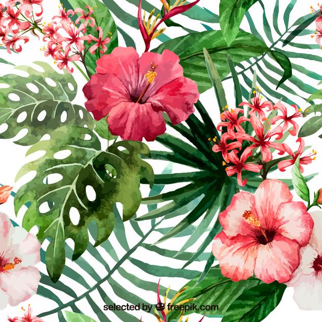 A. Tropicales 27