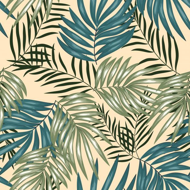 A. Tropicales 31