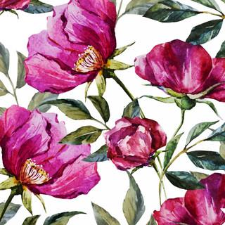 A. Florales. 50