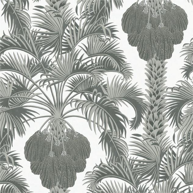 A. Tropicales 37