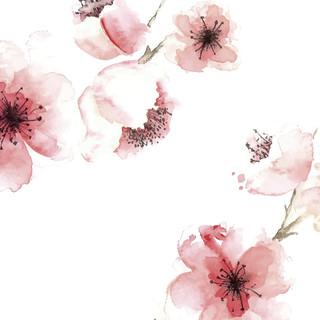 A. Spring 07