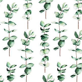A . Botanical 10