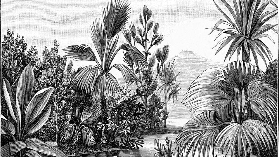 M. Royal Palms  20