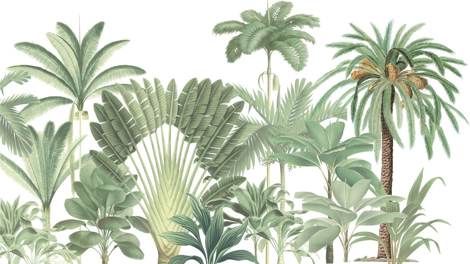 M. Royal palms 09
