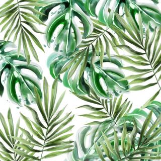 A. Tropicales 28