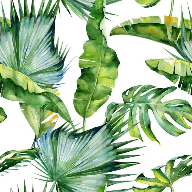 A. Tropicales 29
