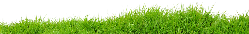 Grass-PNG_edited.png