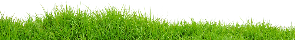 Grass-PNG.png