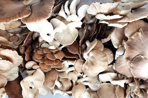 Fresh Oyster Mushrooms 0.5kg