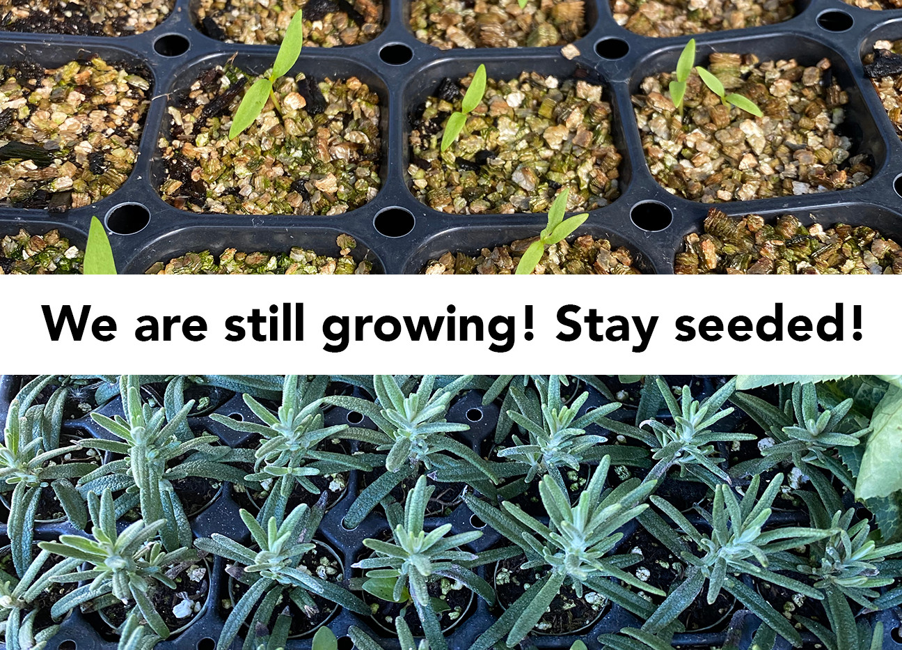 Stay seeded! we are still growing!.jpg