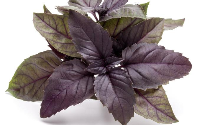 basil Purple Ruffles.jpg