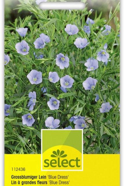 Grossblumiger Lein 'Blue Dress'