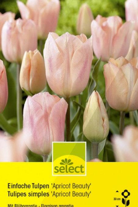 Einfache Tulpen 'Apricot Beauty'