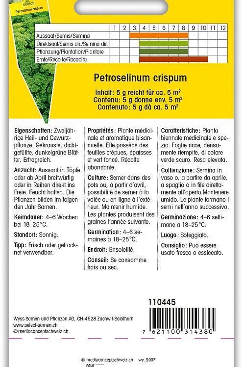 Petersilie 'extra krause' - Petroselinum crispum