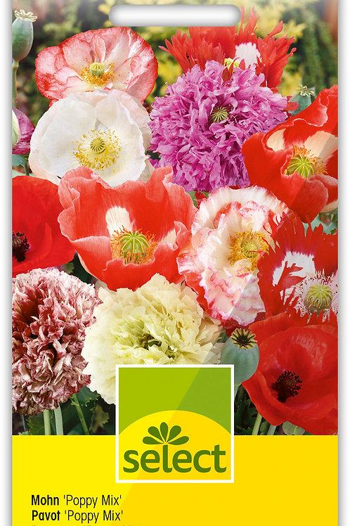 Mohn 'Poppy Mix' - Papaver rhoeas, P. somniferum