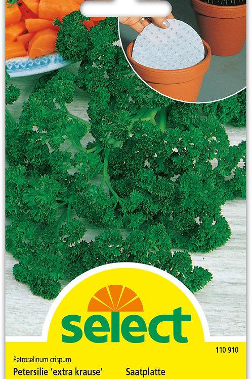 Petersilie 'extra krause' (Saatplatte) - Petroselinum crispum