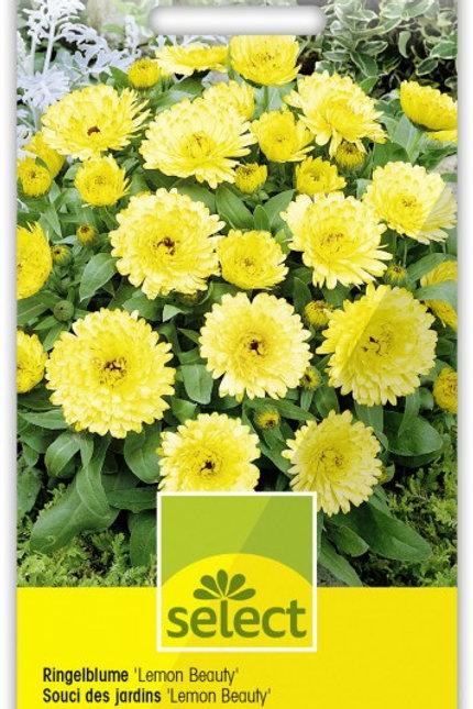 Ringelblume 'Lemon Beauty'