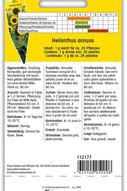 Sonnenblume 'Waooh' - Helianthus annuus