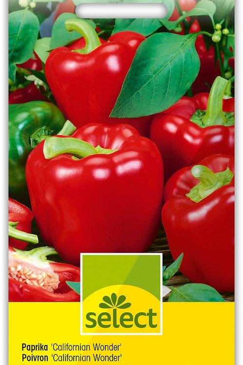 Gemüsepaprika 'Californian Wonder' - Capsicum annuum