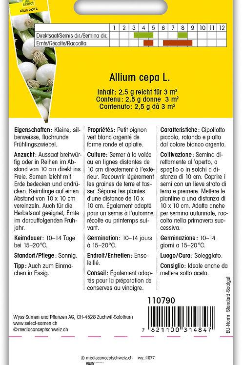 Küchenzwiebel 'Barletta' - Allium cepa L.