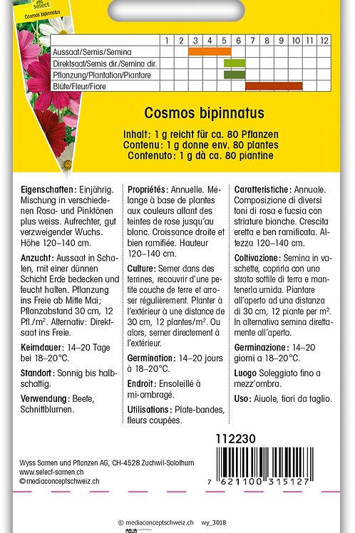 Schmuckkörbchen gemischte Farben - Cosmos bipinnatus