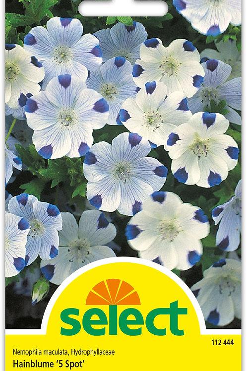 Hainblume '5 Spot' - Nemophila maculata