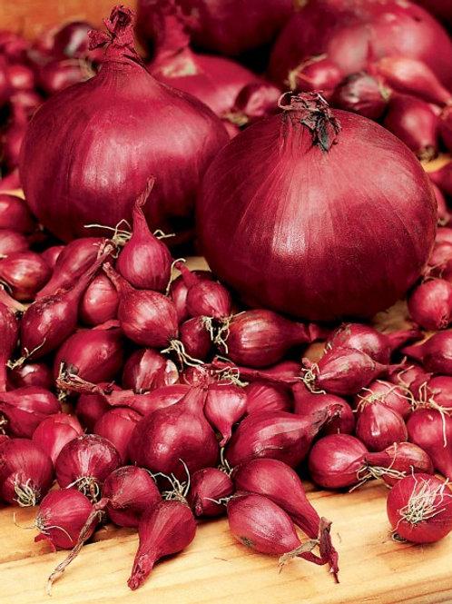 Steckzwiebel 'Rote', 500 g
