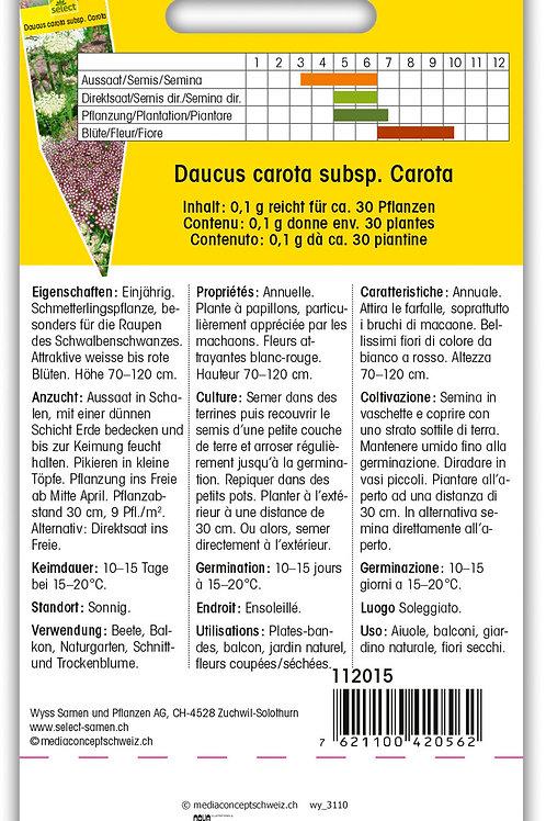 Wilde Möhre 'Papillon' - Daucus carota subsp. Carota
