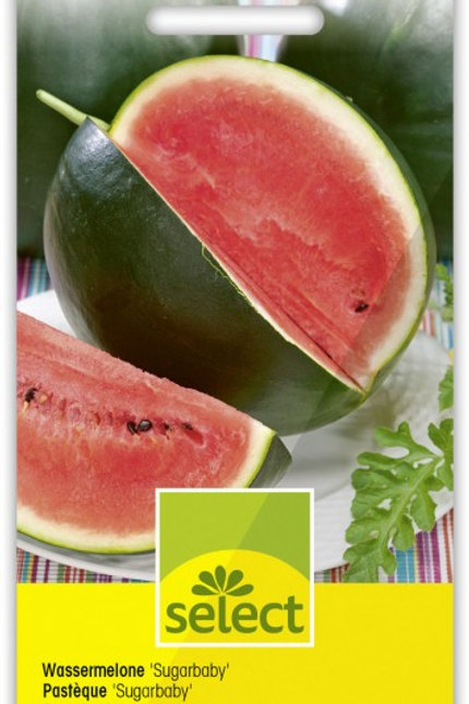 Wassermelone 'Sugarbaby'