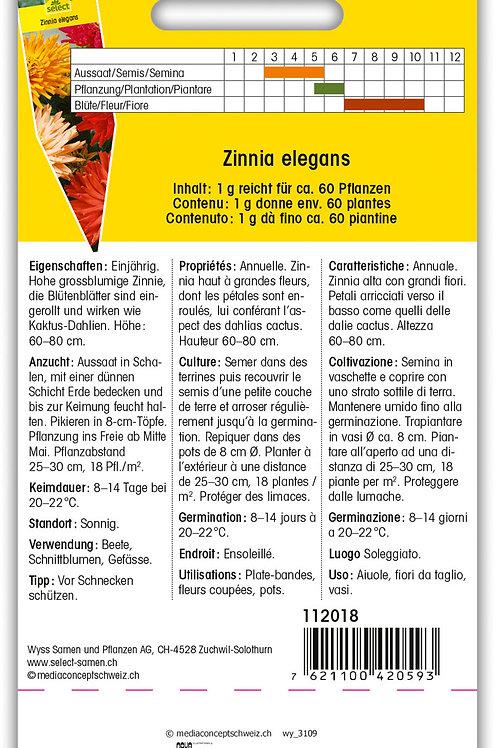 Zinnie 'Riesen-Kaktus' - Zinnia elegans