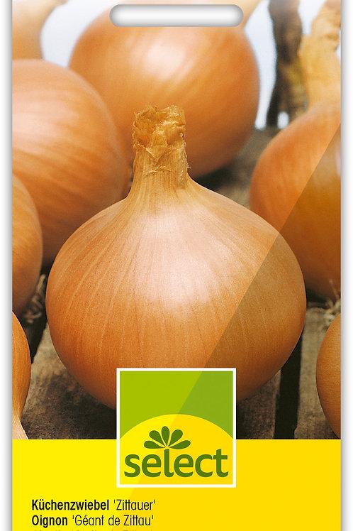 Küchenzwiebel 'Zittauer' - Allium cepa L.