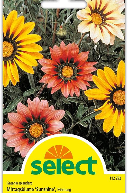 Mittagsblume 'Sunshine', Mischung - Gazania splendens