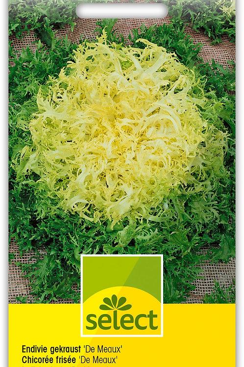 Endivie gekraust 'De Meaux' - Cichorium endivia L. var. latifolium
