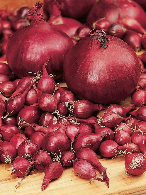 Steckzwiebel 'Rote Einheimische', 250 g - Allium cepa L.