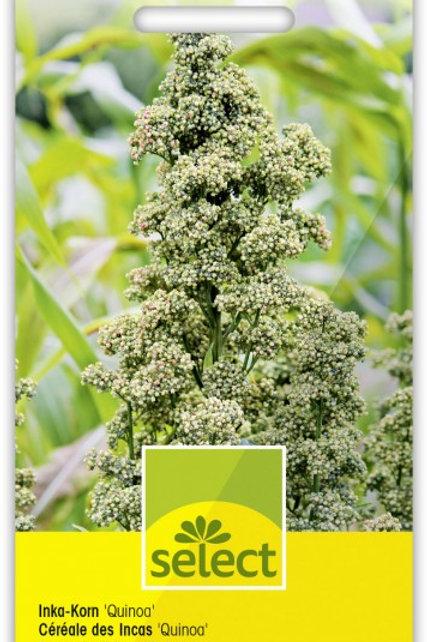 Inka-Korn 'Quinoa'