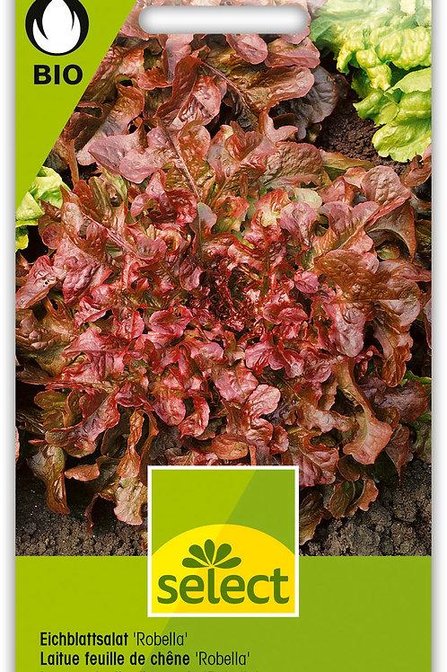 Eichblattsalat 'Robella' - Lactuca sativa L. var. crispa