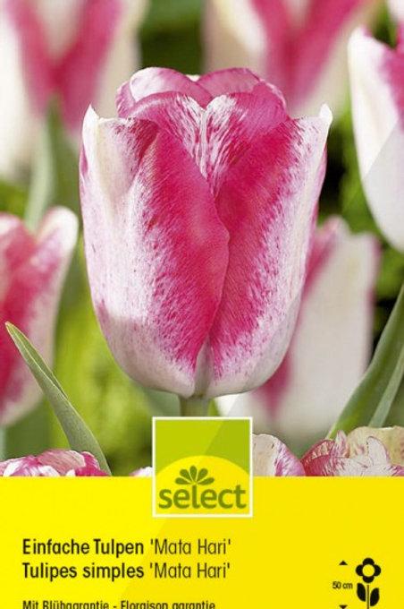 Einfache Tulpen 'Mata Hari'