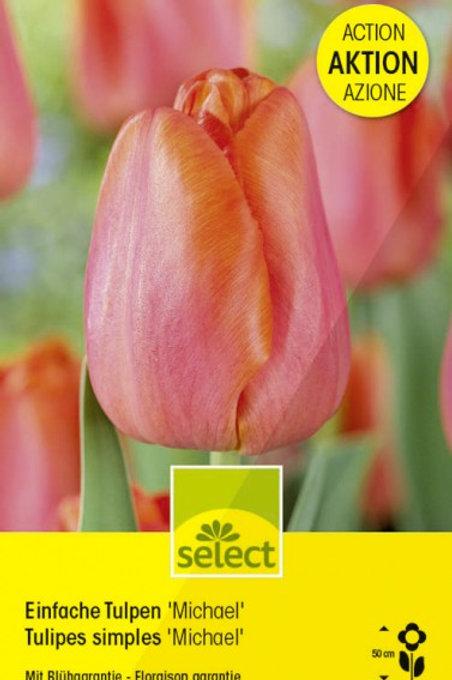 Einfache Tulpen 'Michael'
