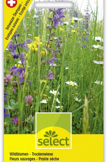 Wildblumen - Trockenwiese
