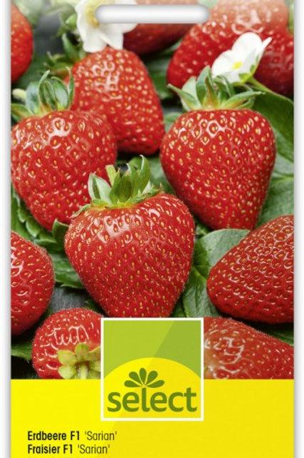 Erdbeere F1 'Sarian'
