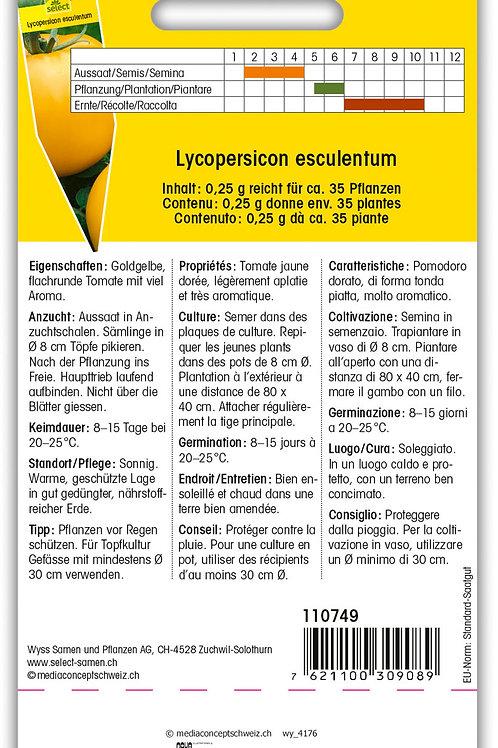 Tomate 'Goldene Königin' - Lycopersicon esculentum