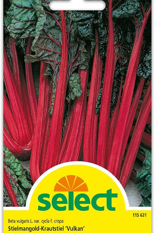 Stielmangold, Krautstiel 'Vulkan' - Beta vulgaris var. flavescens