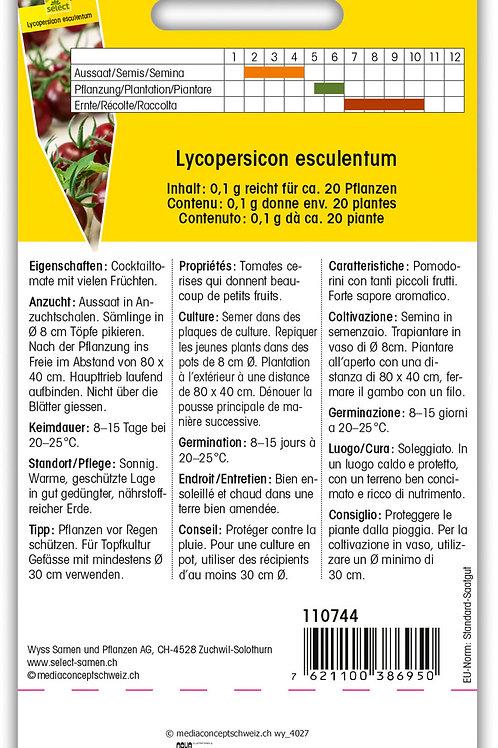 Tomate 'Black Cherry' - Lycopersicon esculentum