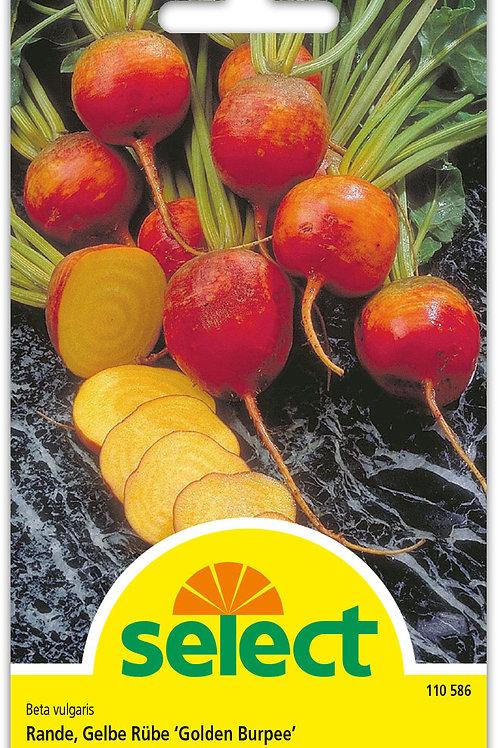 Gelbe Rübe 'Golden Burpee' - Beta vulgaris