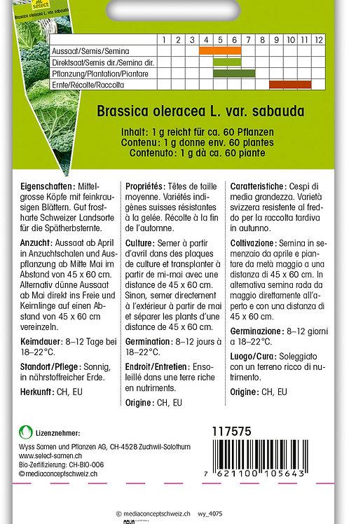 Köhli-Wirsing 'Paradiesler' - Brassica oleracea L. var. sabauda