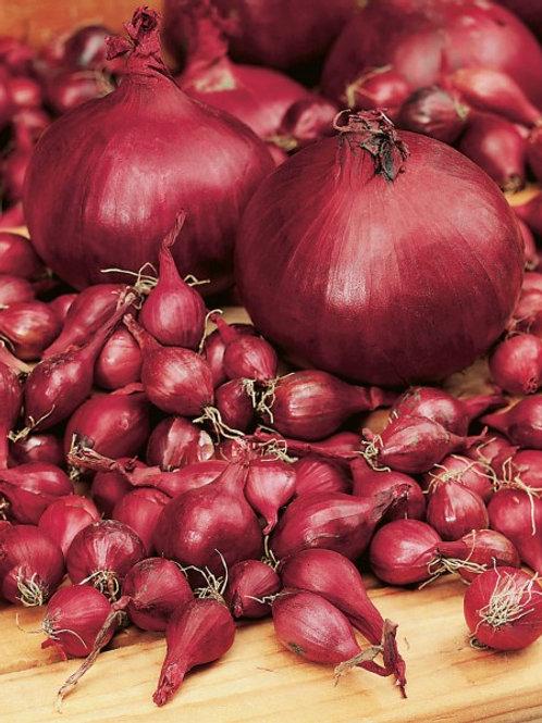 Steckzwiebel 'Rote Einheimische', 250 g