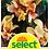 Thumbnail: Indisches Blumenrohr 'Angel Martin'