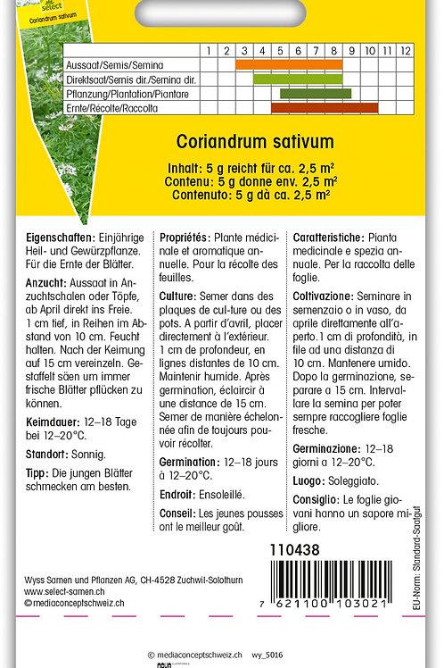 Koriander 'Cilantro' - Coriandrum sativum