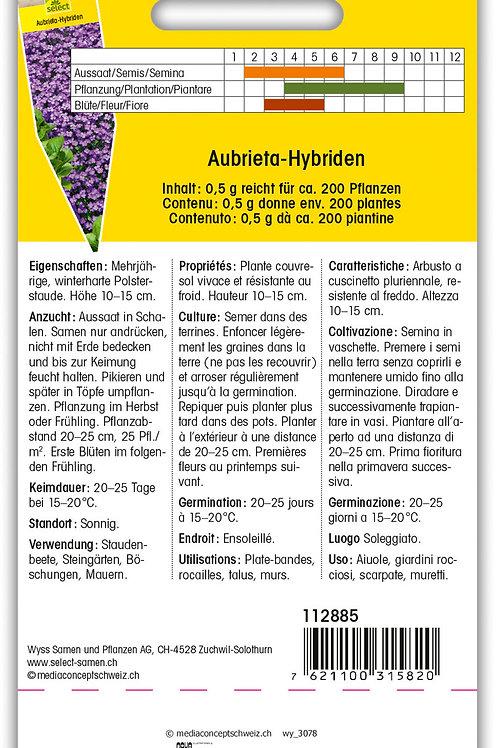 Blaukissen - Aubrieta-Hybriden