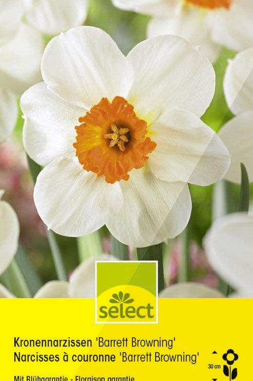 Kronen-Narzissen 'Barret Browning' - Narcissus